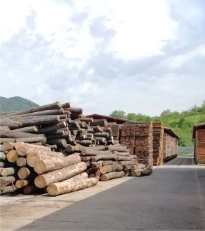 "The authorities of passing ""pseudo - measures"" to fight illegal logging"